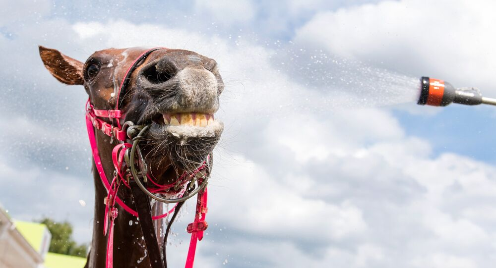 A horse gets a refreshing shower after taking part in a race during the derby week in Hamburg, northern Germany, on July 9, 2016